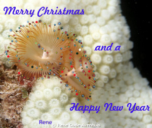 Merry Christmas and a Happy New Year by Rene Oude Avenhuis 